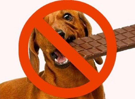 What To Do If Your Dog Eats Chocolate Candy